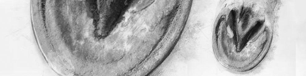 détail pied cheval podologie équine parage